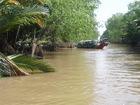 マングローブの林をボートで進む