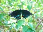 色鮮やかな南国の蝶