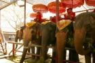 スタンバイして乗客を待つ象たち