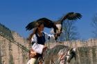 鳥のショ-