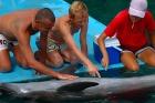 イルカの生態・能力についての講習も!
