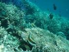 色鮮やかな熱帯魚や珊瑚礁などがあふれるパラオの海