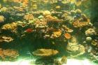 サンゴ礁研究センター(水族館)