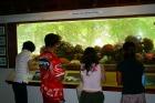 サンゴ礁研究センターで珊瑚を観察