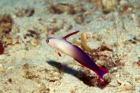 色とりどりの熱帯魚