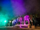 夜も芸達者なバリの象さん