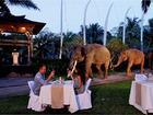 シェフ自慢の豪華ディナーを象のすぐ隣で!