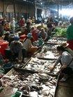 オールドマーケットにはトンレサップ湖でとれた魚も売っています