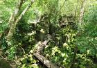 修復されないまま森の中に眠るアンコールの巨大寺院