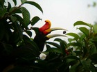木の葉に隠れる、これは・・・鳥?
