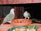 ハビタット動物園にて ピンク頭の鳥さん
