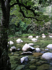 ゴロゴロとした岩が特徴的
