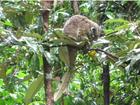 木登りカンガルーなど、レアな動物に会えたらいいね