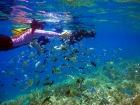 南国ならではのカラフルなサンゴ礁と魚たち