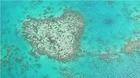 コアラの形に似ていると評判のアーリントンリーフにある通称コアラリーフ
