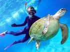 グレートバリアリーフで出会った海ガメ