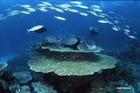 世界遺産グレートバリアリーフの海の珊瑚