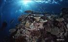 これぞ世界遺産の海、大きなサンゴ礁