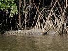 ディントリー川クルーズで野生のイリエワニと遭遇