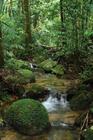 ケアンズの世界遺産、熱帯雨林を存分に満喫