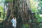 クロージーリバーフィグツリーを見学