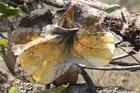 エリマキトカゲなど真の野生動物たちとの遭遇