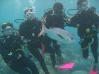 ダイビング未経験者でも楽しめる体験ダイビング