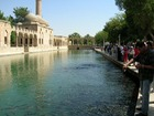 神聖な鯉が泳ぐ静かな池とハリル・ラフマンモスク