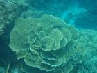 バラのような珊瑚が見られるロックアイランド周辺