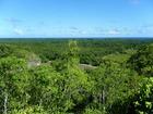 ポストカードのようなパラオの森と海