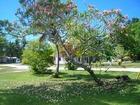 南国らしいカラフルな花が咲き誇るペリリュー島