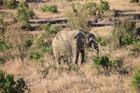 一番大きい動物 ゾウ!