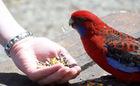 カラフルな鳥たち