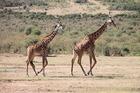 野生動物の数の多さに定評のあるマサイマラナショナルリザーブ