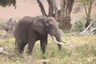 ゆったりとした動きの象にいやされて