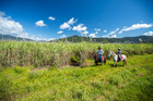 馬に乗ってさとうきび畑を間近に見よう
