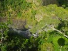 スカイレールから熱帯雨林を真下に見る