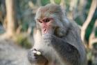 中国最大規模と言われている北京動物園