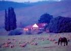 美しい牧場風景