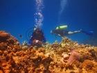 珊瑚礁がとてもきれい