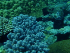 ずーっと見ていても飽きない色とりどりの珊瑚たち