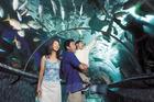 シンガポール水族館のチューブ水槽で魚を見上げる