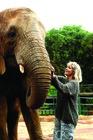4WD車に乗り込み、象を探しに!