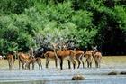古い歴史を持つクルーガー公園で野生動物に会う