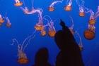 サンフランシスコ湾水族館 または モントレー湾水族館