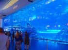 モール内の巨大な水槽!