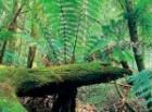 緑豊かな森でヒーリング