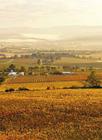 ブドウ畑が広がるヤラバレー