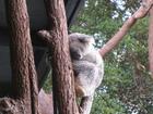 道中、コアラやカンガルーの姿を観察できるかも