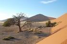 世界遺産に登録された神秘のナミブ砂漠